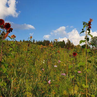 Bienenfleißige Umspannwerke (Foto: Haslachhof, Löffingen)