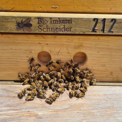 Die Bienen kommen (Foto: Haslachhof, Löffingen)