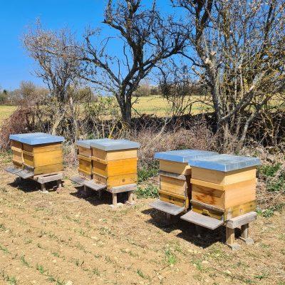 Der Unterbau für die Bienenbeuten (Holzkästen) muss genau waagrecht sein, denn die Bienen mögen es ganz exakt. Dann werden die Beuten platziert und geöffnet. Da die Bienen durch den Transport etwas aufgeregt sind, empfiehlt es sich hier, die Imker-Ausrüstung anzuziehen.
