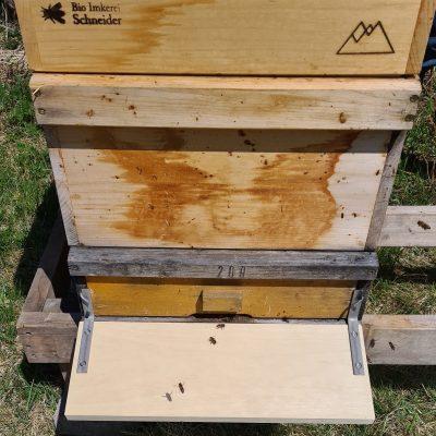 """Vor der Öffnung wird ein Holzbrett angebracht. Die Bienen können bequem auf der """"Landebahn"""" landen und in die schmale Öffnung des Bienenkastens schlüpfen. Die Bienen werden den Sommer bis September in Löffingen verbringen."""